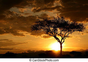 tansania, afrikas, afrikanisch, sunset.