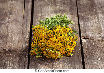 Tansy Tanacetum - perennial herbaceous plants Compositae...