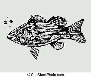 tanul, fish