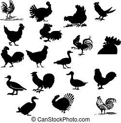 tanya, madár, állhatatos