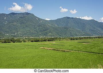 tanya, zöld, hántolatlan rizs