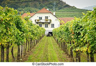 tanyatulajdonosok, épület, alatt, egy, szőlőskert