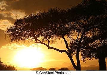 tanzania, áfrica, africano, sunset.