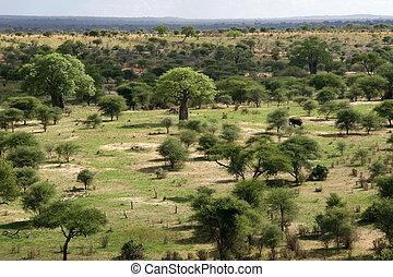 tanzanie, afrique, afrique, landscap