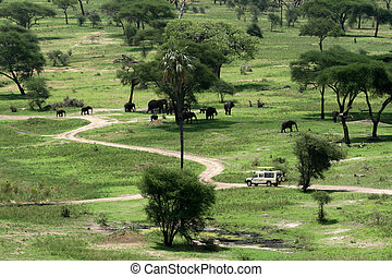 tanzanie, habitat, afrique, national, -, tarangire, park., éléphant
