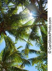 tapas, de, árboles de palma