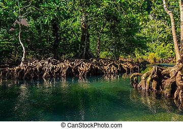 Tapom in Krabi Thailand