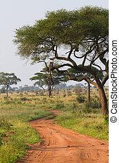 Tarangire road - A scenic dirt track in Tarangire National...