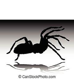 tarantula black vector silhouettes