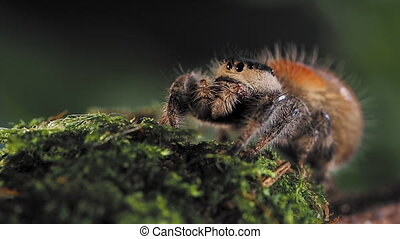 Tarantula, dangerous insect. Close up portrait of spider. ...