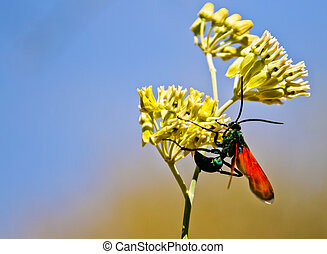 Tarantula Hawk Up Close