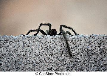 Tarantula Legs