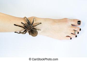 Tarantula on Leg