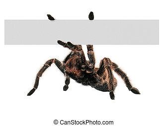 Tarantula Spider Holding A Blank Sign - An large tarantula...