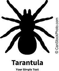 tarantula, wektor, czarnoskóry, pająk, ilustracja