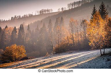 tard, autumn., forêt