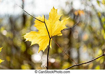 tard, dernier, feuilles, jaune, automne, park.