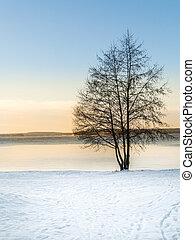 tarde, afternoon., pôr do sol, inverno
