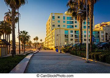 tarde, caminata, luz, santa, oceanfront, californi, monica