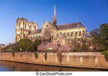 tarde, catedral, primavera, parís, francia, tiempo, notre, durante, dama
