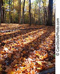 tarde, otoño, paisaje, en, illinois