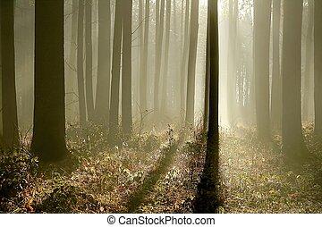 tarde, outono, alvorada, floresta