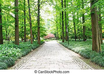 tarde, primero, soleado, afternoon., por, sendero bosque