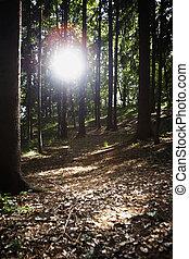 tarde, sol, tarde, bosque