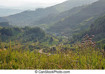 tarde, verde ligero, colinas, tarde