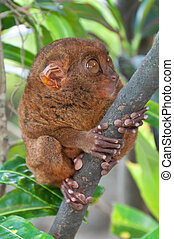 tardier on a tree