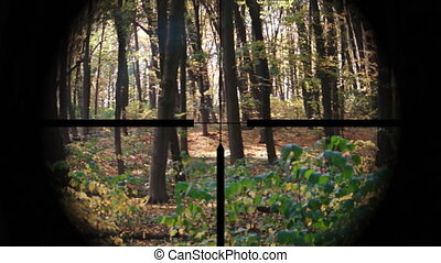 Targeting Scope Perspective of Deciduous, Temperate Forest -...