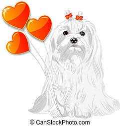 tarjeta de valentine, con, perro, maltés, y, corazones