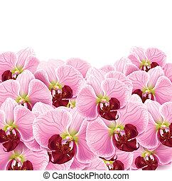 tarjeta, flores, saludo, plano de fondo, orquídea