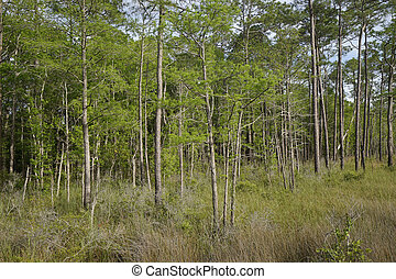 Tarkiln Bayou Preserve State Park - Wet prairie landscape of...