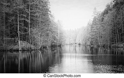Tarn with mist during in the woodland lake, Black and white