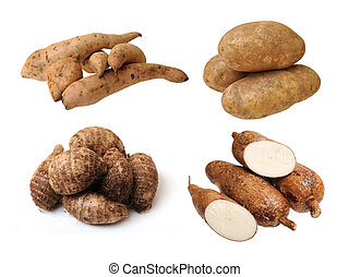 taro, casava, potatoes and sweet potatoes isolated on white background