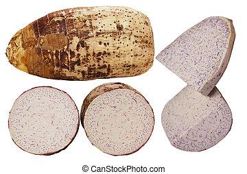 Taro Colocasia Esculenta roots isolated on white background