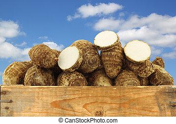 taro, fresco, raíces, (colocasia)