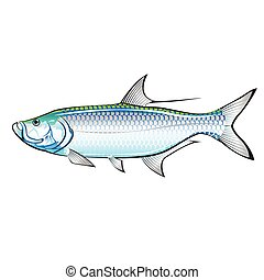 Tarpon Ocean Gamefish illustration vector