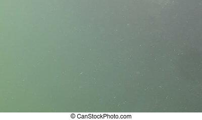 Tarpon Underwater Shot Ten