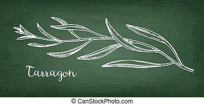 Tarragon chalk sketch. - Tarragon. Chalk sketch on ...