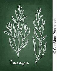 Tarragon chalk sketch. - Tarragon set. Chalk sketch on ...