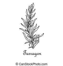 Tarragon, doodle sketch