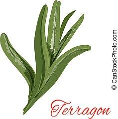 Tarragon Illustrations and Clip Art. 354 Tarragon royalty ...