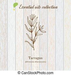 Tarragon, essential oil label, aromatic plant. Vector ...