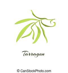 Tarragon herb. Vector illustration - Tarragon herb or ...