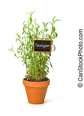 Tarragon in a clay pot with a wooden label