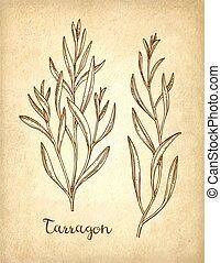 Tarragon ink sketch. - Tarragon set. Ink sketch on old paper...