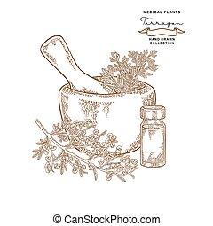 Tarragon leaves. Medical plants set. Vector illustration ...