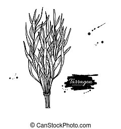 Tarragon vector hand drawn illustration. Isolated spice object.